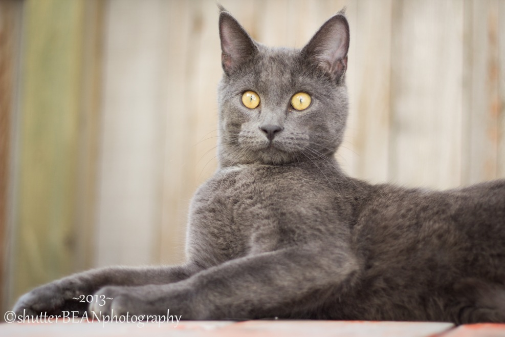 KattyKat-3