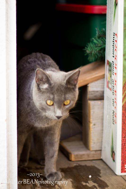 KattyKat-6